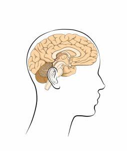 Limbic system: the neuroanatomical substrate of psychoemotional neuroreality