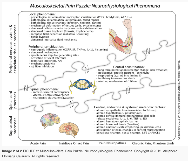 Musculoskeletal Pain Puzzle